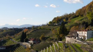 Colli Orientali del Friuli
